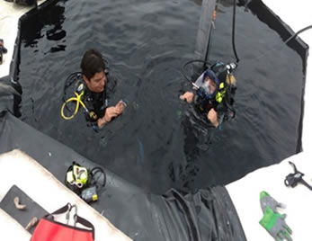 BUCEO-01